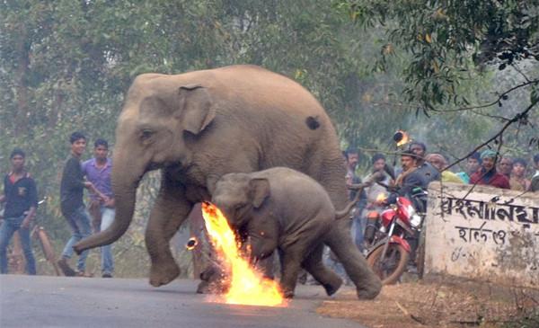 大象棲息地被人類弄爛 借過馬路「還直接被丟火球」攝影師心疼到拍不下去!