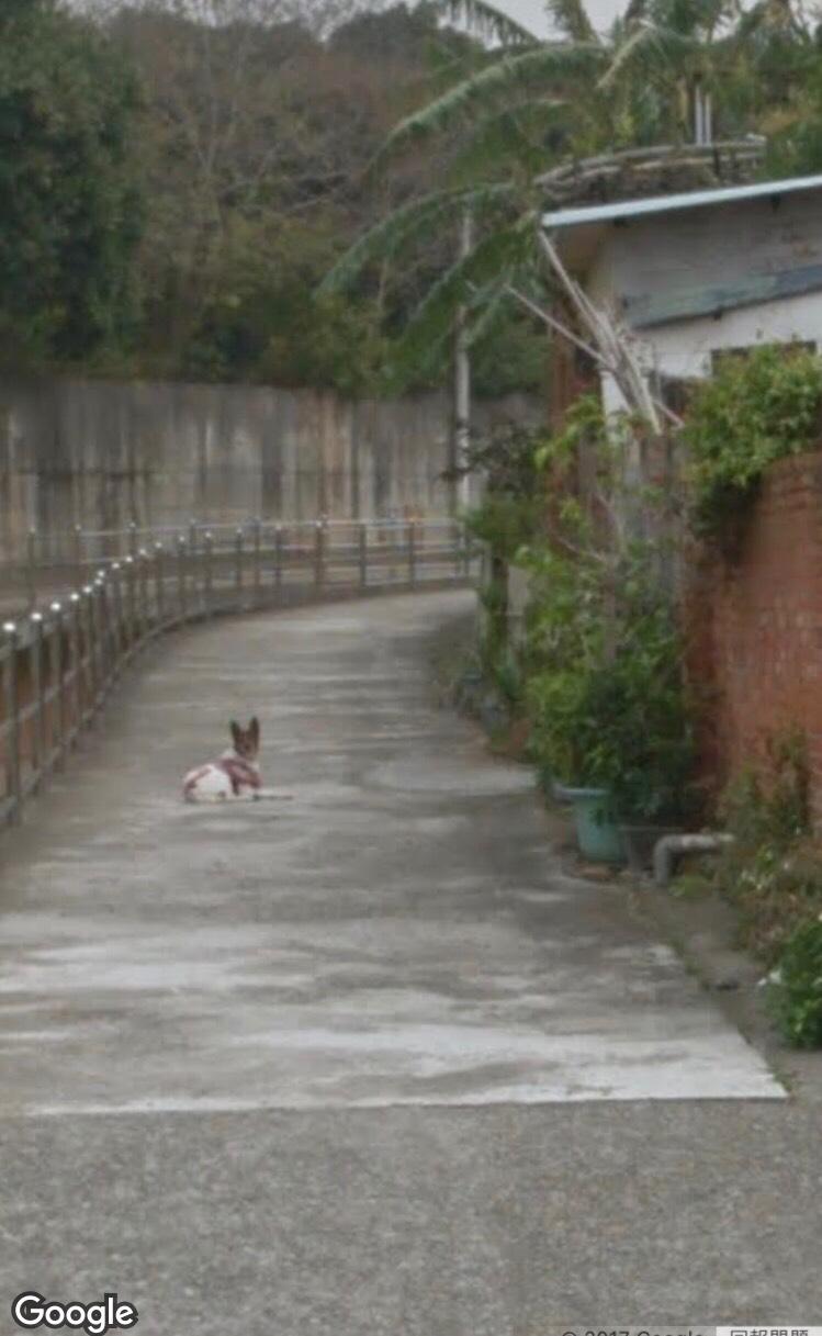 狗狗過世10年他心碎難忘 打開Google街景卻驚見「熟悉回眸」爆哭:原來你一直守著家...