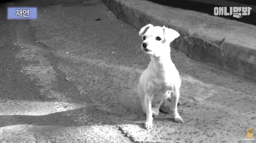 混帳飼主離開前一句「你在這裡等著」狗狗原地站10年 好心人抱起就拼命掙扎...原因太心痛