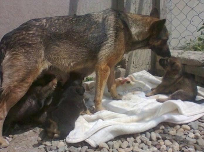 她經過墓地突然聽到「奇怪的哽咽聲」…走近發現狗狗竟然在挖墳 洞裡藏著牠的世界!