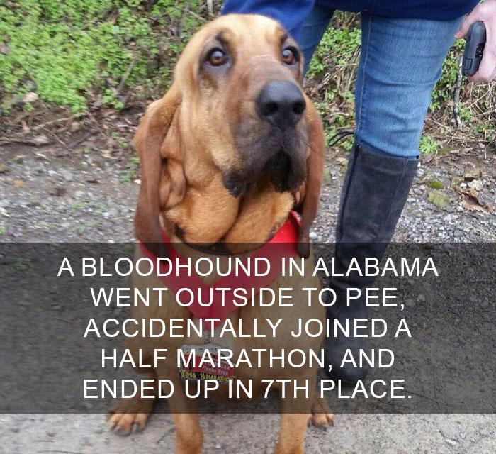 22件「看完心情好到想吹口哨」的溫暖世界事實 警犬混進馬拉松比賽...還得第7名!