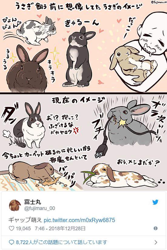 設計師飼主畫「養兔子的理想和現實」網哭著推爆 現在咬斷的是第999+條充電線:)