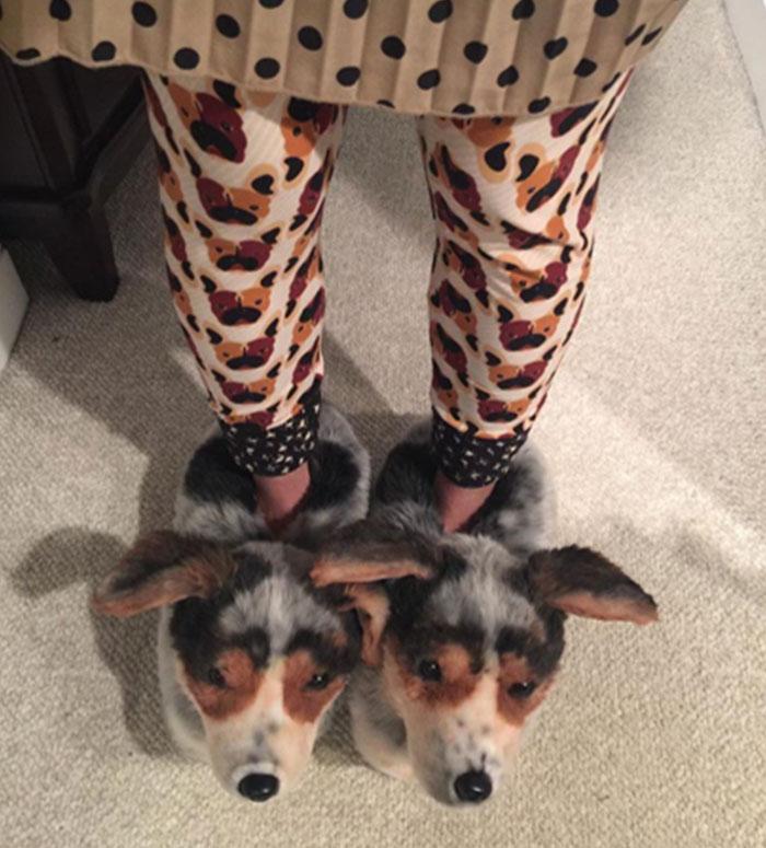 17張奴才全搶瘋的「超擬真客製寵物絨毛拖鞋」 100%複製你的毛孩!
