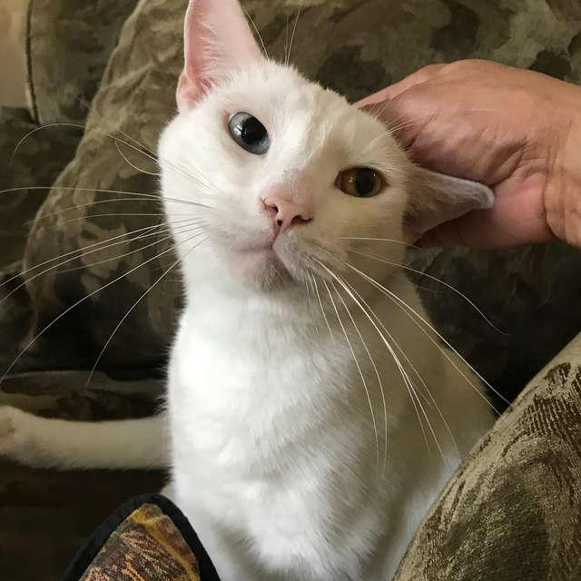 小盲貓被棄養「病到皮膚變石頭」 某天牠張開眼睛...超驚喜出現「全世界最美的瞳孔」