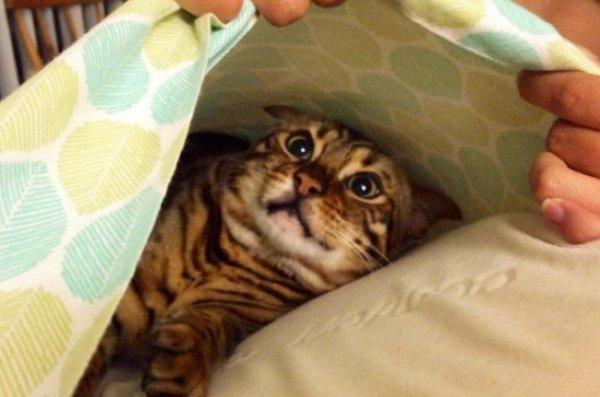25個寵物心底吶喊「人類到底憑什麼當我們的主人」的超爆笑WTF時刻