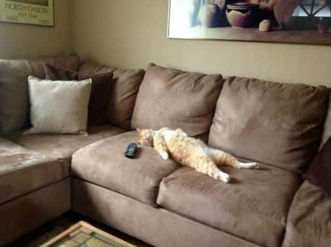 15張「配上對白後根本是吳宗憲」的爆笑貓照 發懶的姿勢就是休假的你!
