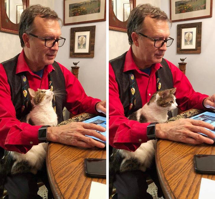 27張解釋為什麼「邊緣人都該養寵物」的可愛照片 過來人:養寵物就跟包養妹子一樣...
