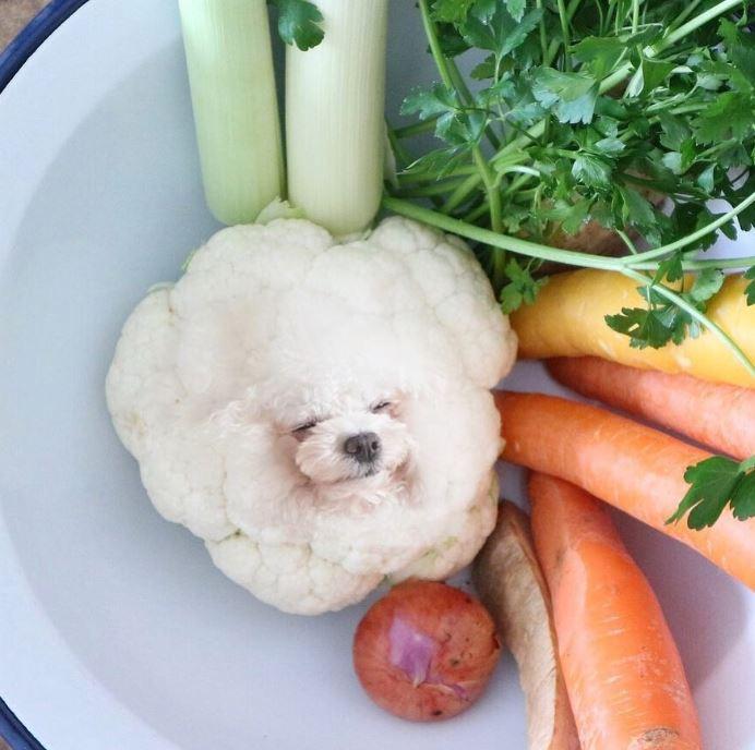 8張會害你買到破產「狗狗變成食物」萌照 博美花椰菜萌到捨不得吃❤️️