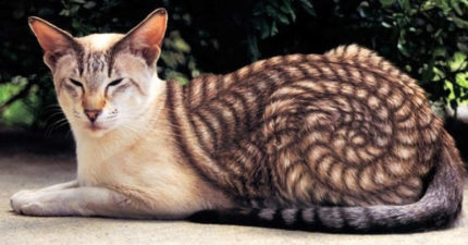 22隻「大自然是最棒藝術家」的超特別花紋動物!貓咪「裝成蝙蝠俠」超霸氣