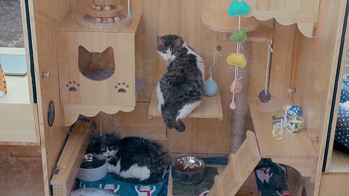 工程師「幫流浪貓蓋帝寶」設備超先進 進門前「紅外線先掃描」天敵直接歸零