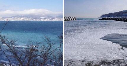 北海道沿岸「海平面蓋滿白泡泡」 近看才發現是「我們超愛吃」的日常料理!