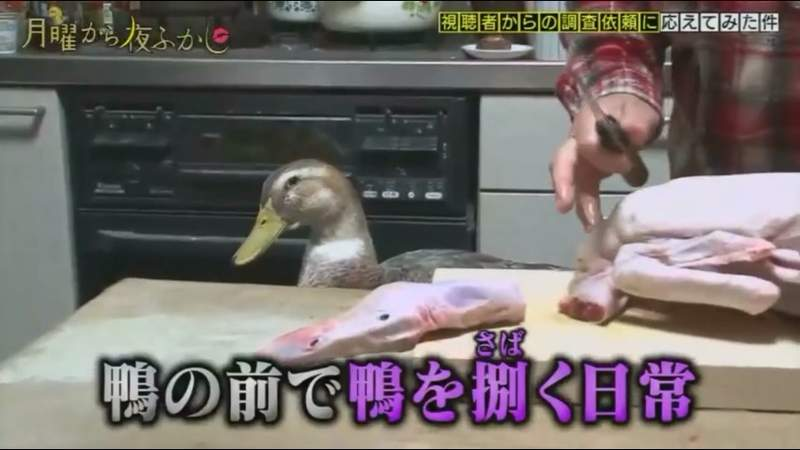 最愛吃鴨肉的阿嬤寵物竟然也是鴨!晚餐時「牠的表情」卻讓網友好心疼:目睹第一現場QQ