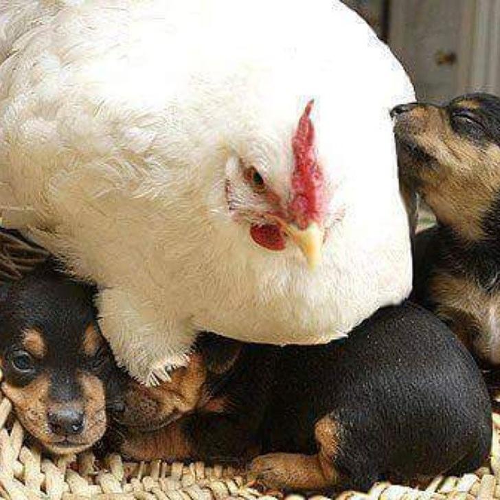 25張讓你明白「當媽媽真的很辛苦」的動物母子照 這個「心死的眼神」人類動物都通用