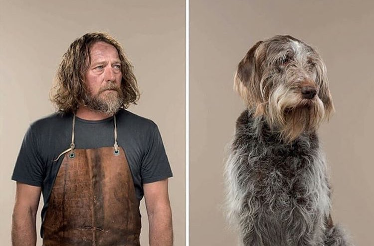 17張「狗狗神Cosplay人類」的超爆笑對比照 牠竟然比以豪還適合泡麵頭XD