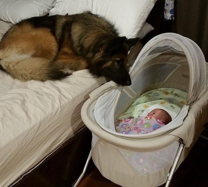 20張暖照證明「人類無法想像狗狗對我們的愛」 牠:我在這裡啊,人類