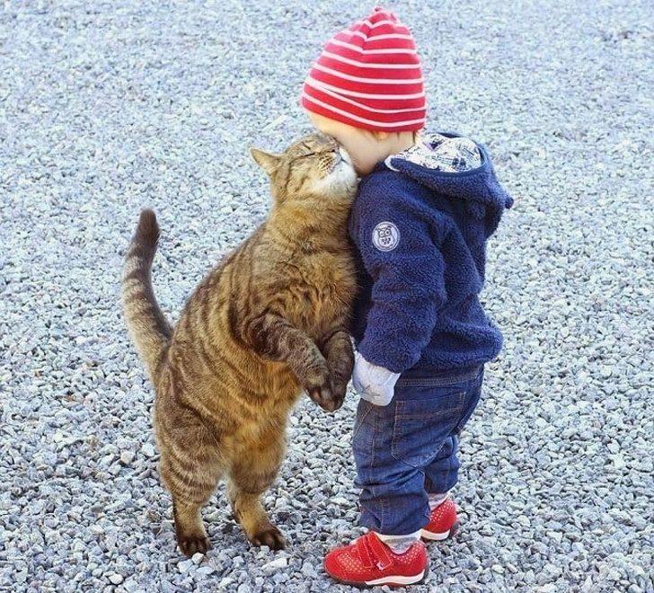 20張「鏟屎官就是一群抖M小可愛」的貓皇霸氣示愛照 100歲阿公跟著淪陷了