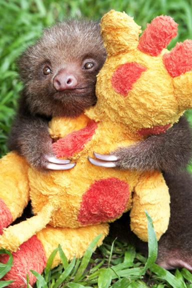 24個隨時會怒吼「這是我的玩具誰都不准碰」的超賣萌動物 海獺抱著「縮小的自己」超可愛