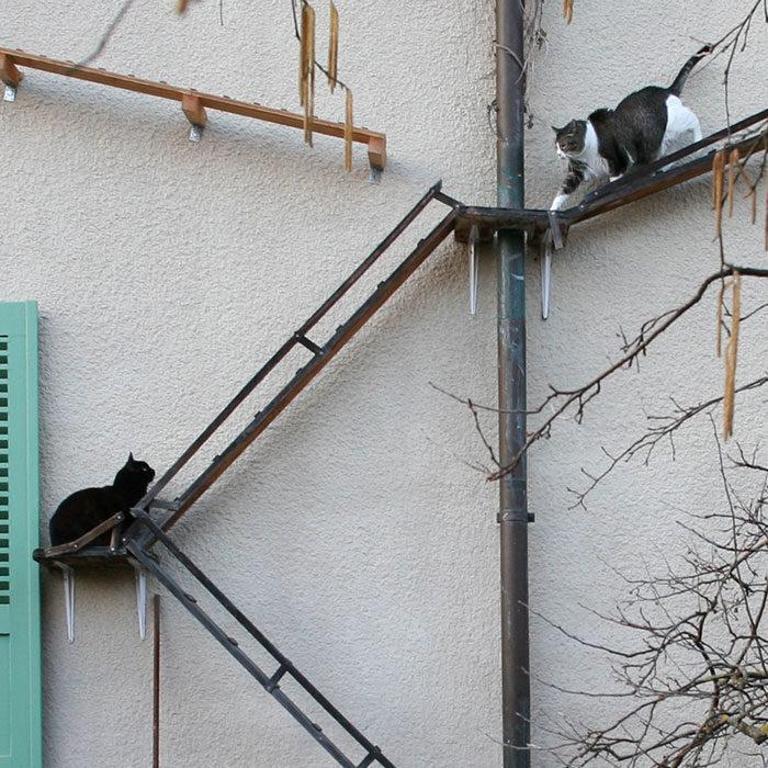 22張照片說明「整個城市都住貓奴」會有什麼下場 破壞建築物只是基本!