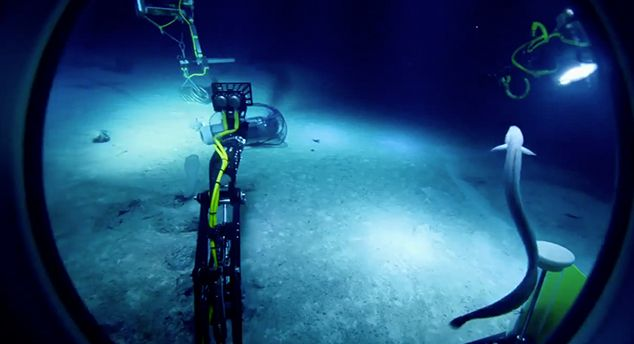 NASA員工畫出「海溝插畫」證明我們對深海超無知 底下「可以讓人類絕種」的動物太恐怖了