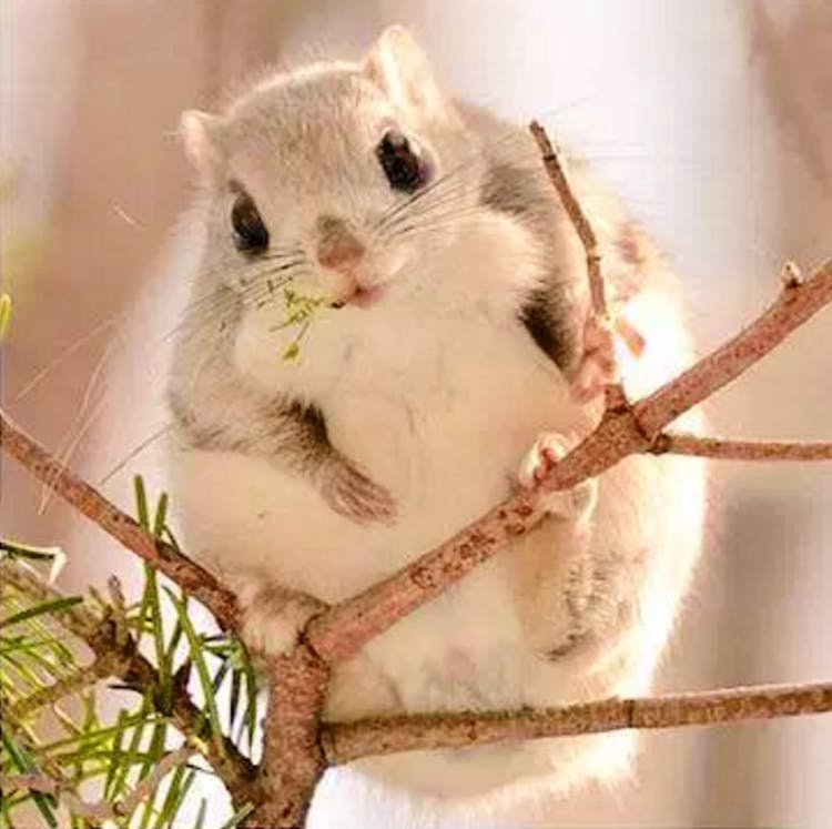 8張證明「精靈系小松鼠」是從童話裡溜出來的可愛萌照❤️️