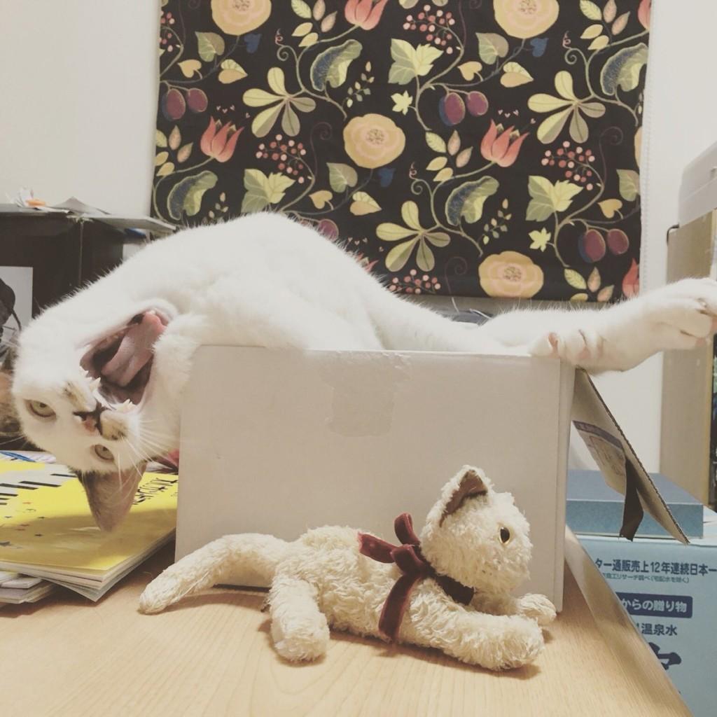 31張貓生好難「被貓奴逼把偶像包袱全丟掉」的瞬間崩壞照
