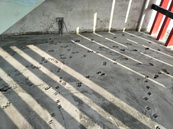 工地剛舖完水泥 他隔天一來驚見「毛孩開趴痕跡」臉都綠了...網笑翻建議:可以變聖地!