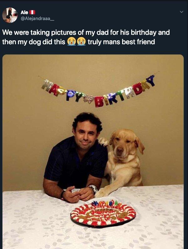 20張「連獸醫也搖頭說難醫」的狗狗壞掉照 和爸爸的生日合照絕對是穿越來的