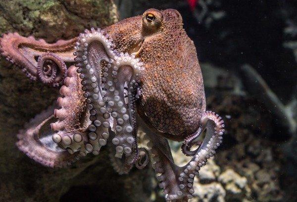 15個「不知道也沒關係」的趣味冷知識 章魚無聊時的消遣也太殘暴