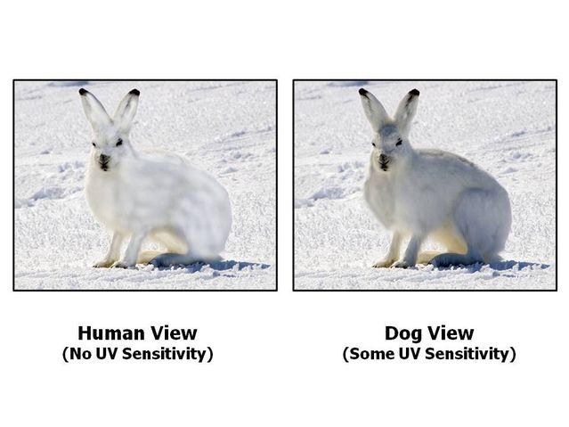 科學家證實「人類眼睛看不到的東西」貓狗都看得到 一直盯著你背後看...你大概就懂了