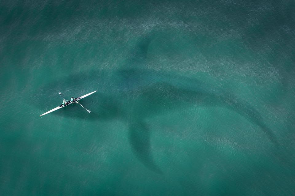 大膽攝影師到澳洲鯊魚籠探險 拿出相機瞬間被「超巨大尖牙」嚇傻!