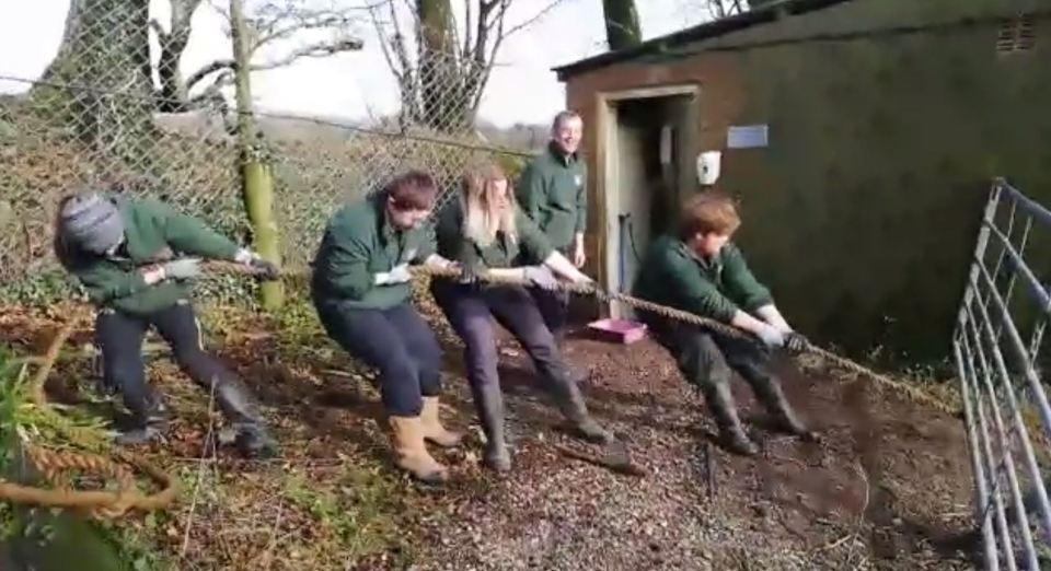 動物園賺門票錢推「與猛獸拔河」 網狂批不人道園方卻回:牠們很需要這種鍛鍊!