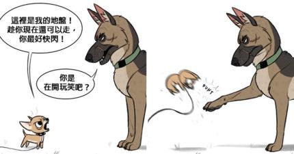 貓狗漫畫新系列!單純貓傻傻落水 傲嬌狗的「霸氣反應」讓人戀愛了❤
