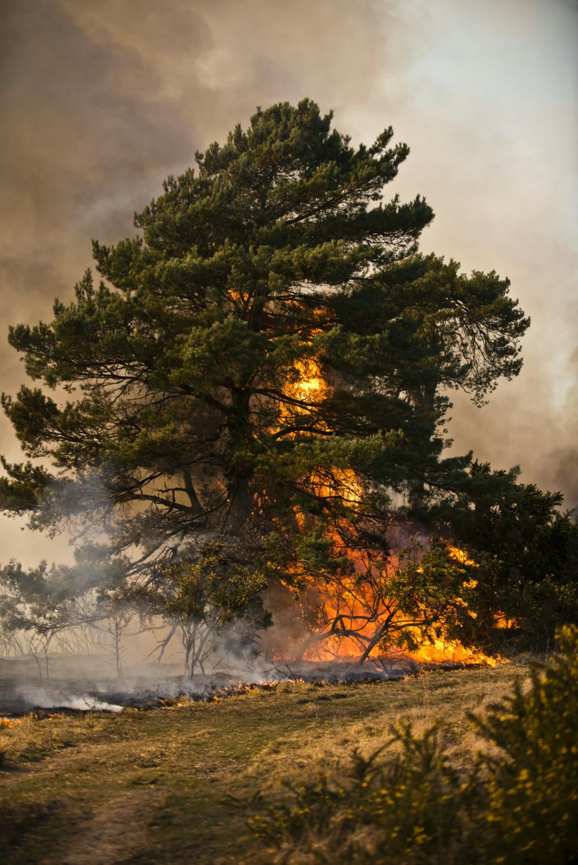 1小時2次噴火把「小熊維尼的家」全燒光 消防員有完美預估依然任務失敗