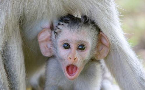 22張像「證明寶寶永遠比大人可愛」的超萌動物寶寶照 剛起床的北極熊寶寶簡直小天使❤