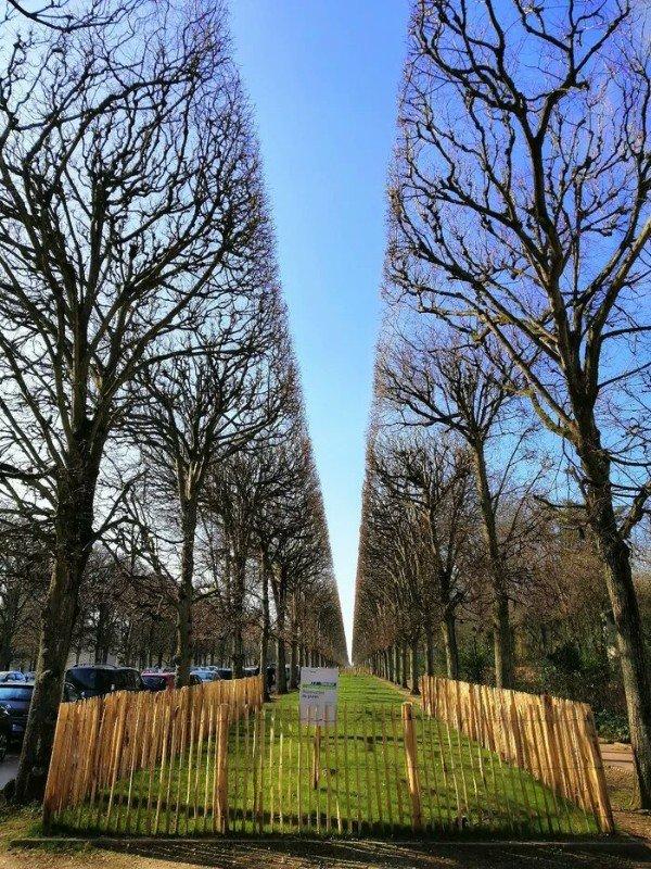 25張讓你看完像「泡溫泉一樣舒服」的超完美療癒照 路樹把天空垂直分成兩半!