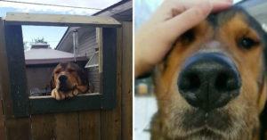 房東不准愛狗妹養寵物!超貼心鄰居為她設計「專屬圓夢通道」 網讚爆:是得來速窗狗❤️️