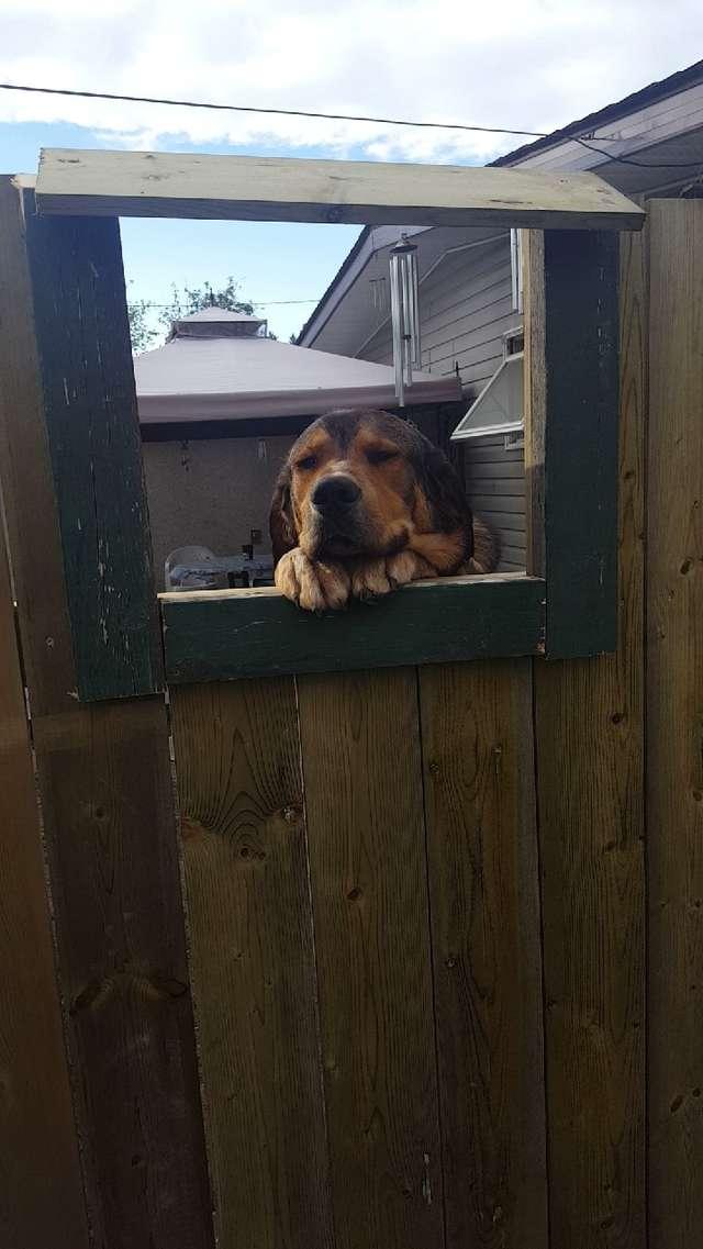 房東不准愛狗妹養寵物!超貼心鄰居為她設計「專屬圓夢通道」 網讚爆:肥汪直送❤️️