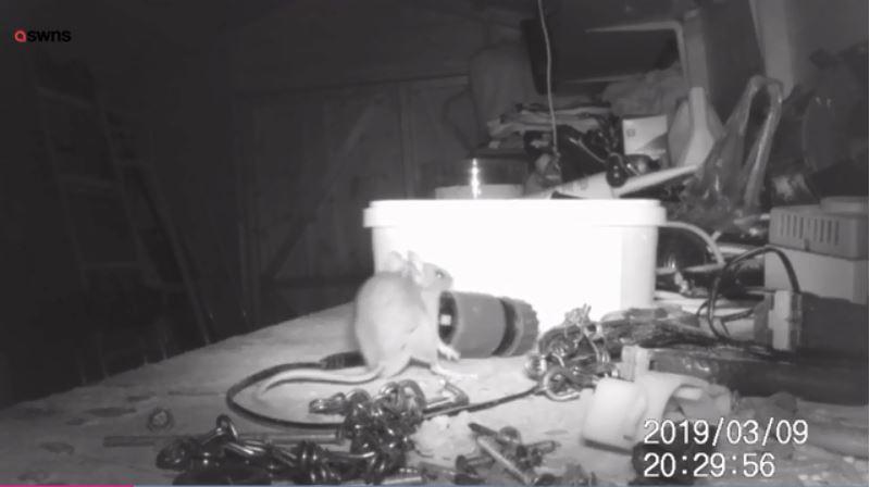 影/髒亂倉庫早上總是「被整理乾淨」 他裝攝影機拍到「小精靈」嚇壞