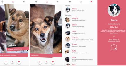 神人幫狗狗推出「寵物版交友軟體」暖哭網友 往左滑「找到一輩子真愛」網友推爆:台灣快跟進!
