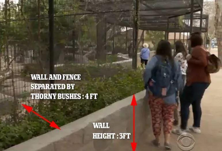 白目女硬要跟黑豹自拍被送醫 她沒學乖痛罵動物園「該改進柵欄」再嗆:會有下個人爬進去!