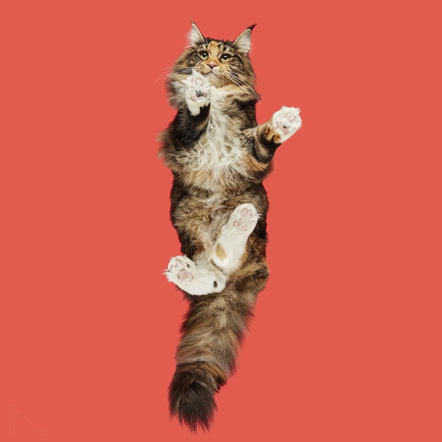 25張貓主子絕不給你看的「下面秘密」 巧克力色肉球超美味...難怪牠都藏起來!