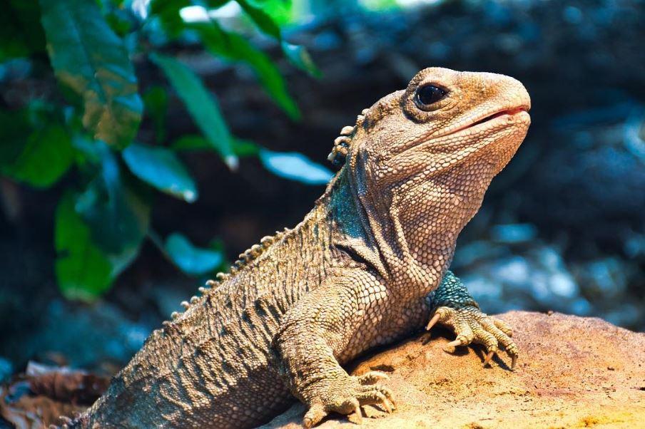 12種讓秦始皇羨慕到爆的「最長壽動物」 如果錦鯉會說話:啊你怎麼又投胎了?
