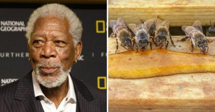 摩根費里曼將70個足球場大牧場變「蜜蜂保育區」 一切都是為了救地球!