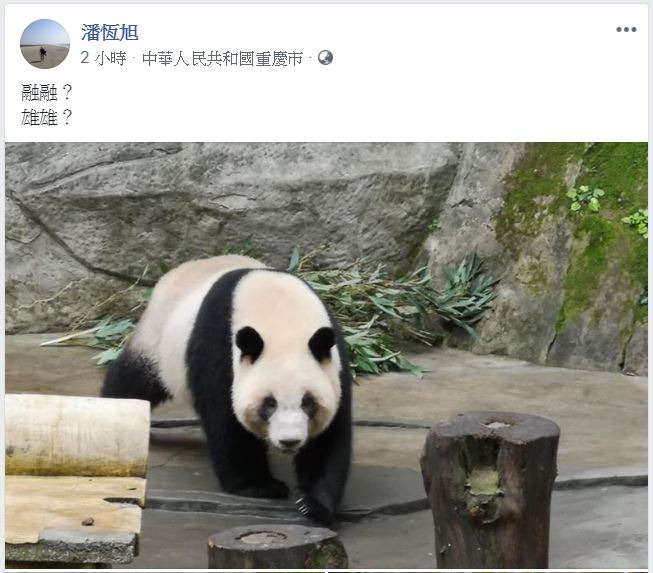 中國「主動送2貓熊」給韓國瑜當伴手禮 高觀光局長「po文地點」早洩密:取名中!