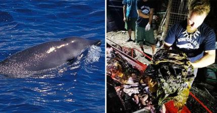 鯨魚寶寶離奇擱淺!專家打開肚子被「40公斤垃圾」嚇呆 他流淚:整個裝滿胃...