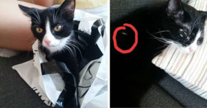 她收養可愛黑白貓回家 一年後牠墨水不夠用...竟變成「雪白仙氣貓」!