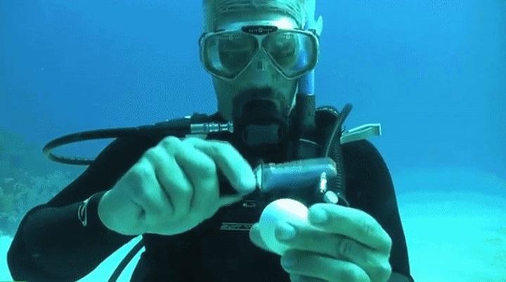 24張「80%的人一輩子都無緣看到」的驚人照片 在海中「敲破蛋」畫面超神奇
