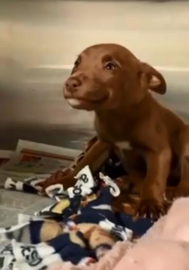 小憨狗被抓到收容所「還忍不住笑出來」 牠靠「太可愛的微笑」成功騙到一個新家!
