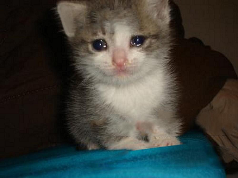 喵星人「知道自己快要離開了」5個提示!必須「裝作不知道」網看到淚崩:這是貓咪的溫柔QQ