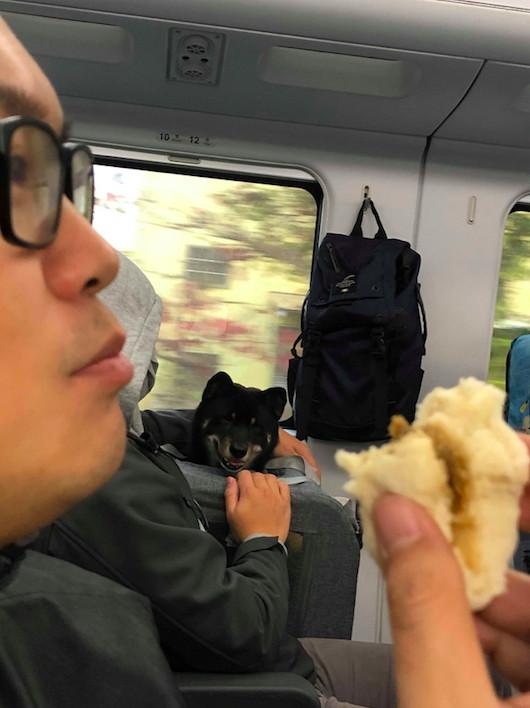 他在高鐵上吃肉包「隔壁乘客肚子超餓」緊盯 看到「最後一口秒變臉」讓大家都想請牠吃飯!